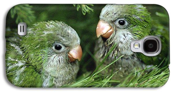 Monk Parakeet Chicks Galaxy S4 Case