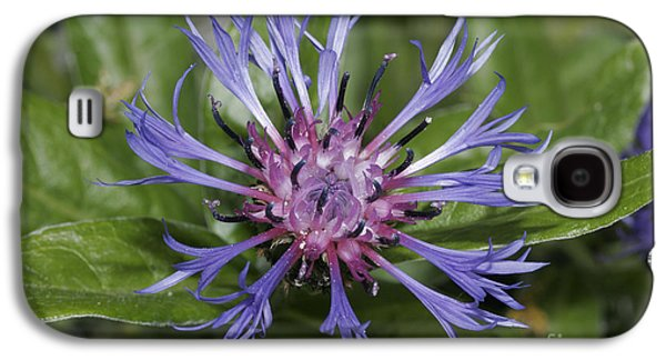 Montane Knapweed Galaxy S4 Case by Ludwig Werle