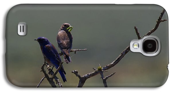 Mountain Bluebird Pair Galaxy S4 Case by Mike  Dawson