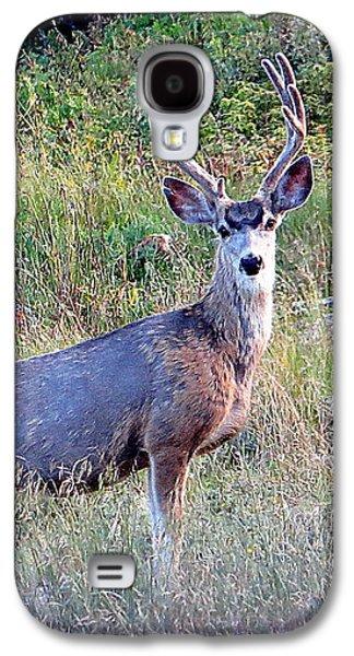 Mule Deer Buck Galaxy S4 Case by Karen Shackles