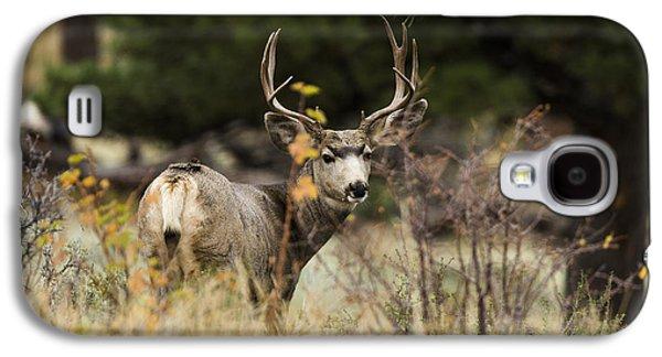 Mule Deer I Galaxy S4 Case by Chad Dutson