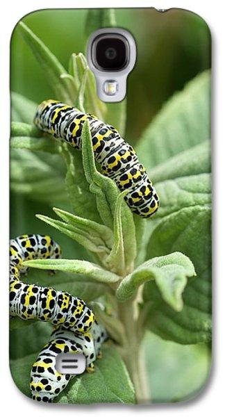 Mullein Moth Caterpillars Galaxy S4 Case by David Aubrey