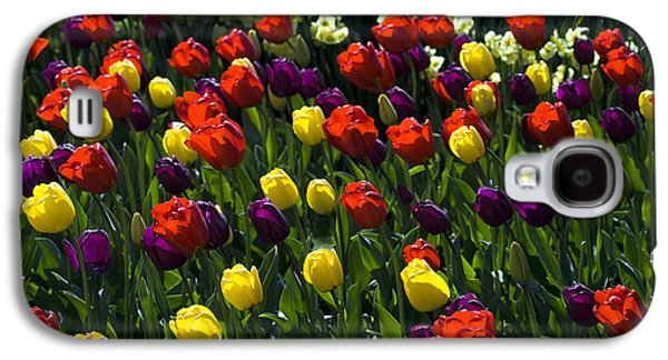 Multicolored Tulips At Tulip Festival. Galaxy S4 Case