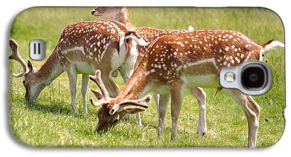 Multitasking Deer In Richmond Park Galaxy S4 Case by Rona Black