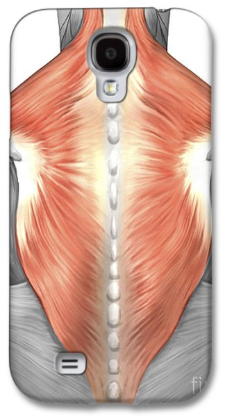 Muscles Of The Back And Neck Galaxy S4 Case