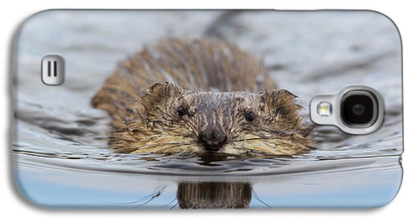 Muskrat Swimming Galaxy S4 Case by Ken Archer