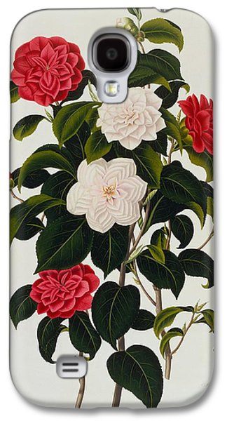 Myrtle Leaved Camellia Galaxy S4 Case by Clara Maria Pope