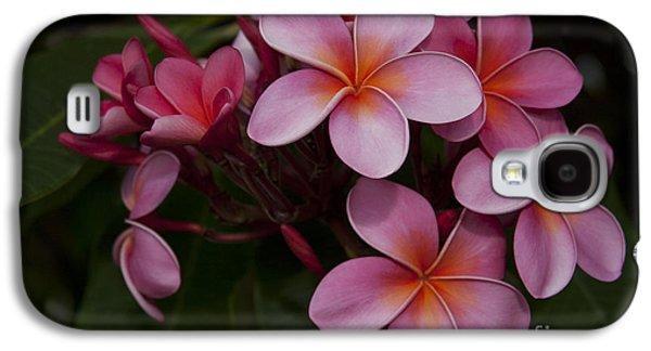 Na Lei Pua Melia O Wailua - Pink Tropical Plumeria Hawaii Galaxy S4 Case