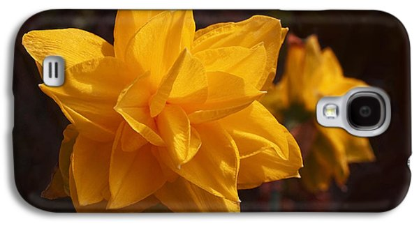 Narcissus Sweet Sue In Full Bloom Galaxy S4 Case by Rona Black