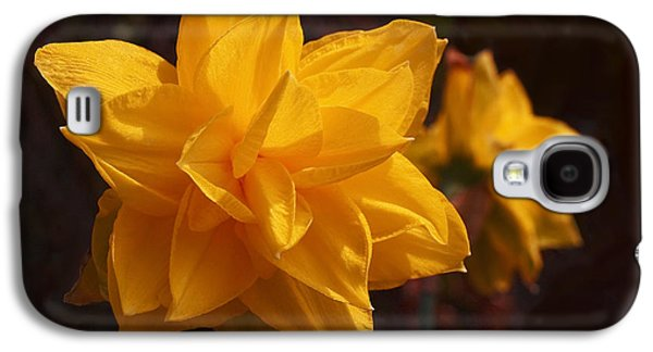 Narcissus Sweet Sue In Full Bloom Galaxy S4 Case