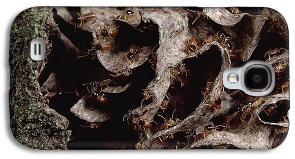 Nasute Termite Nest Amazonian Peru Galaxy S4 Case