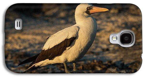 Nazca Booby (sula Granti Galaxy S4 Case by Pete Oxford