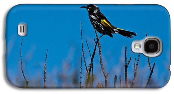 Galaxy S4 Case featuring the photograph New Holland Honeyeater by Miroslava Jurcik