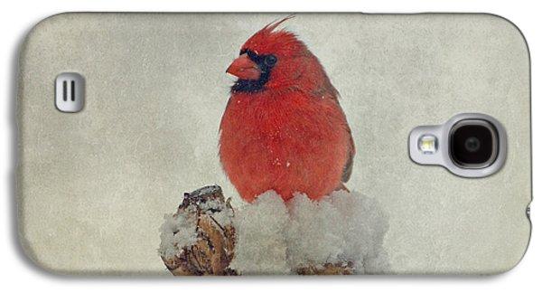 Northern Cardinal Galaxy S4 Case