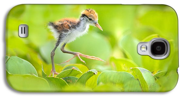 Northern Jacana Jacana Spinosa Chick Galaxy S4 Case by Panoramic Images