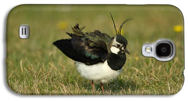 Lapwing Galaxy S4 Case - Northern Lapwing by Helmut Pieper