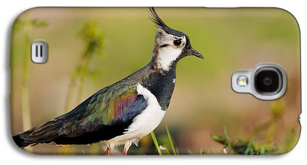 Lapwing Galaxy S4 Case - Northern Lapwing by Willi Rolfes