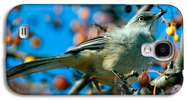 Northern Mockingbird Galaxy S4 Case by Bob Orsillo