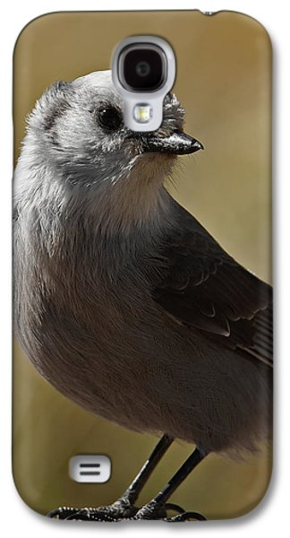 Northern Mockingbird Galaxy S4 Case by Ernie Echols