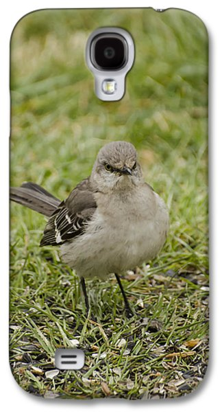 Northern Mockingbird Galaxy S4 Case by Heather Applegate