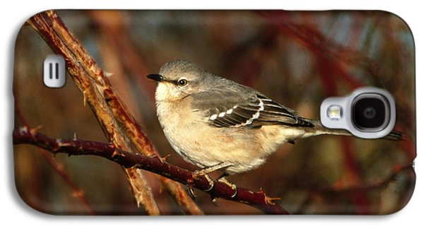 Northern Mockingbird Mimus Polyglottos Galaxy S4 Case by Paul J. Fusco