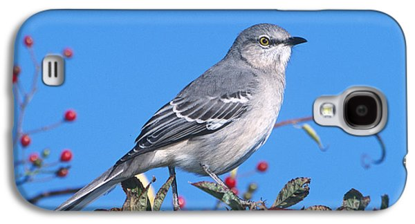 Northern Mockingbird Galaxy S4 Case by Paul J. Fusco