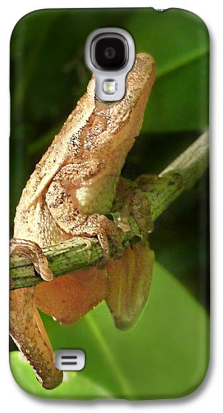 Northern Spring Peeper Galaxy S4 Case by William Tanneberger
