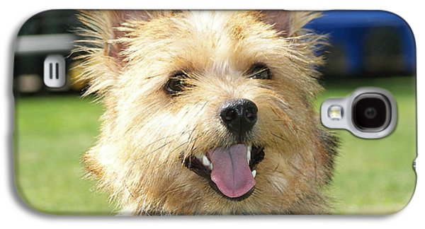Norwich Terrier  Galaxy S4 Case by Marvin Blaine