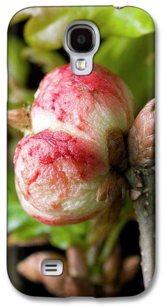 Oak Apple Gall On Oak (quercus Robur) Galaxy S4 Case