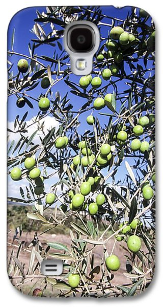 Olive Tree Galaxy S4 Case by Photostock-israel