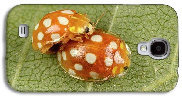 Orange Ladybirds Mating Galaxy S4 Case by Nigel Downer