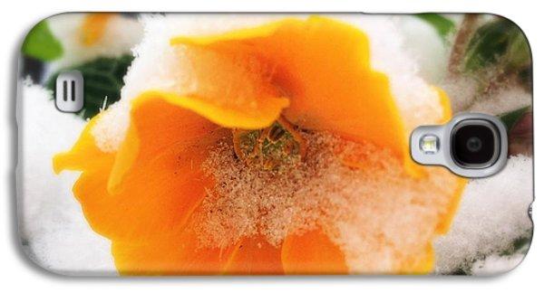 Orange Galaxy S4 Case - Orange Spring Flower With Snow by Matthias Hauser