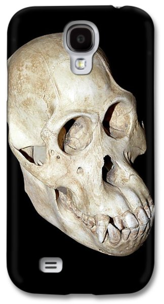 Orangutan Galaxy S4 Case - Orangutan Skull by Dirk Wiersma
