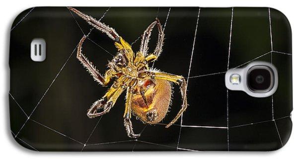 Orb-weaver Spider In Web Panguana Galaxy S4 Case by Konrad Wothe