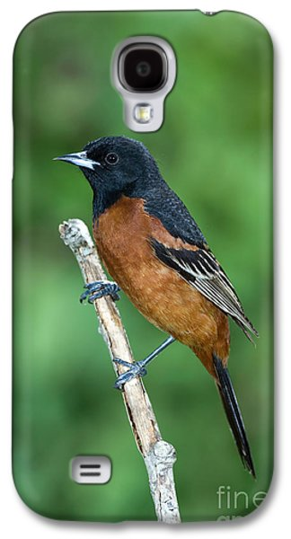 Orchard Oriole Icterus Spurius Adult Galaxy S4 Case by Anthony Mercieca