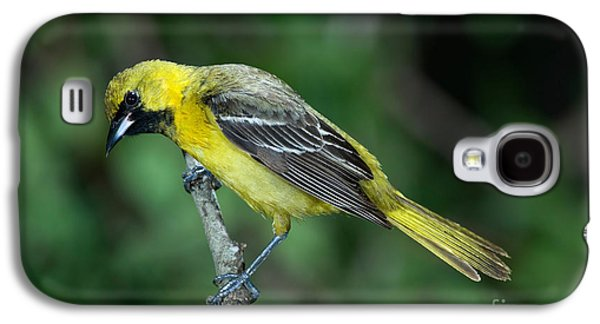 Orchard Oriole Icterus Spurius Juvenile Galaxy S4 Case by Anthony Mercieca