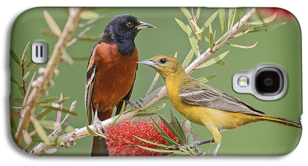 Orchard Oriole Pair Galaxy S4 Case by Bonnie Barry