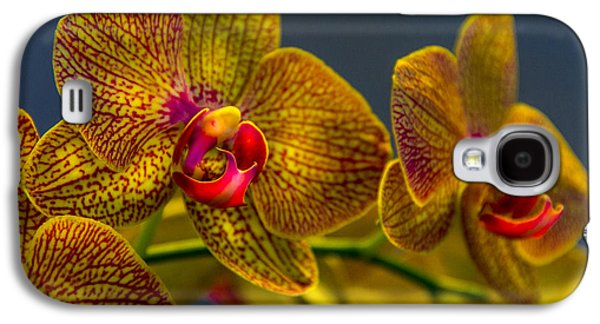 Orchid Galaxy S4 Case - Orchid Color by Marvin Spates