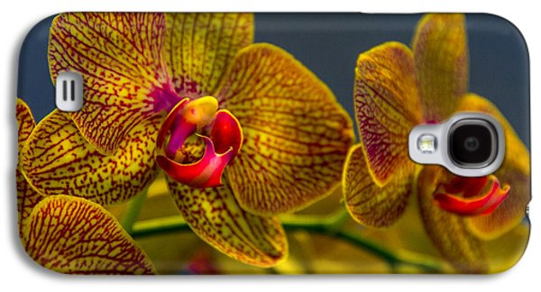 Orchid Color Galaxy S4 Case