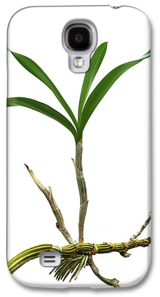 Orchid (dendrobium Sp.) Daughter Plant Galaxy S4 Case