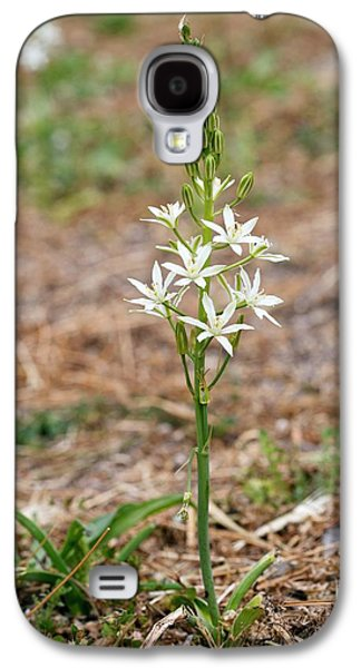 Ornithogalum Narbonense In Flower Galaxy S4 Case by Bob Gibbons