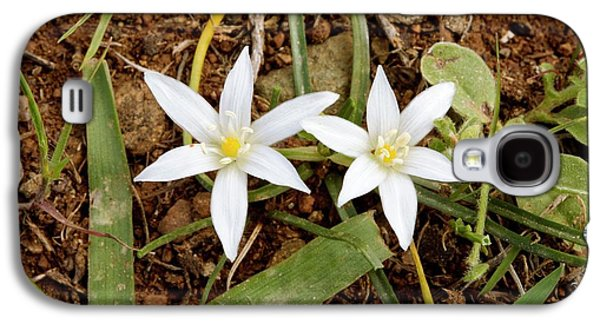 Ornithogalum Pedicellare In Flower Galaxy S4 Case by Bob Gibbons