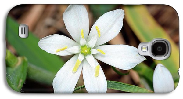 Ornithogalum Umbellatum Flower Galaxy S4 Case by Bruno Petriglia
