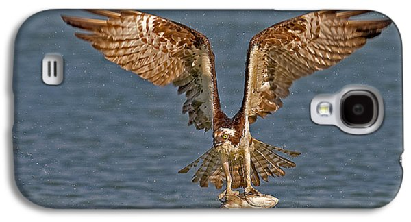 Osprey Morning Catch Galaxy S4 Case by Susan Candelario