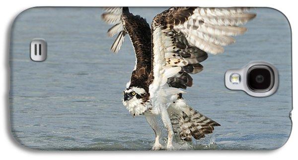 Osprey Taking Off Galaxy S4 Case