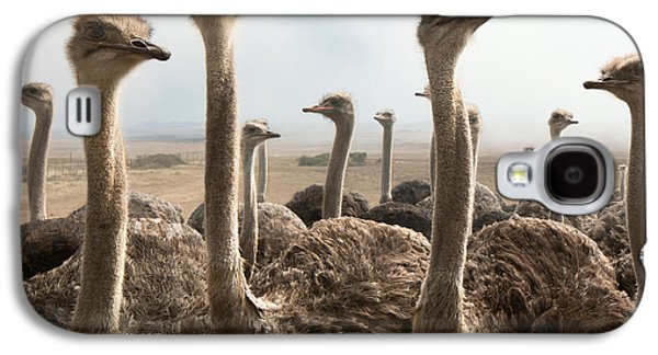 Ostrich Heads Galaxy S4 Case by Johan Swanepoel