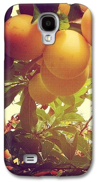 Orange Galaxy S4 Case - Our Plum Tree Is Loaded This Year...any by Blenda Studio