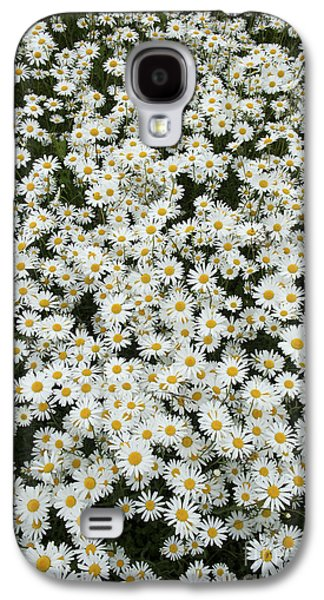 Oxeye Daises Galaxy S4 Case by Tim Gainey