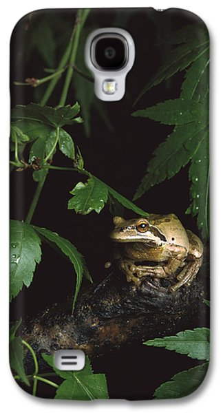 Pacific Tree Frog North America Galaxy S4 Case by Gerry Ellis