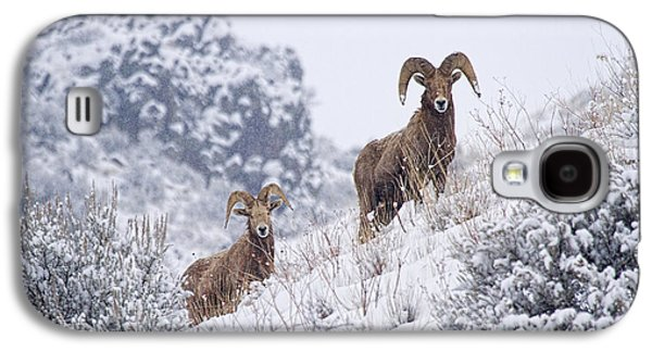 Pair Of Winter Rams Galaxy S4 Case by Mike  Dawson